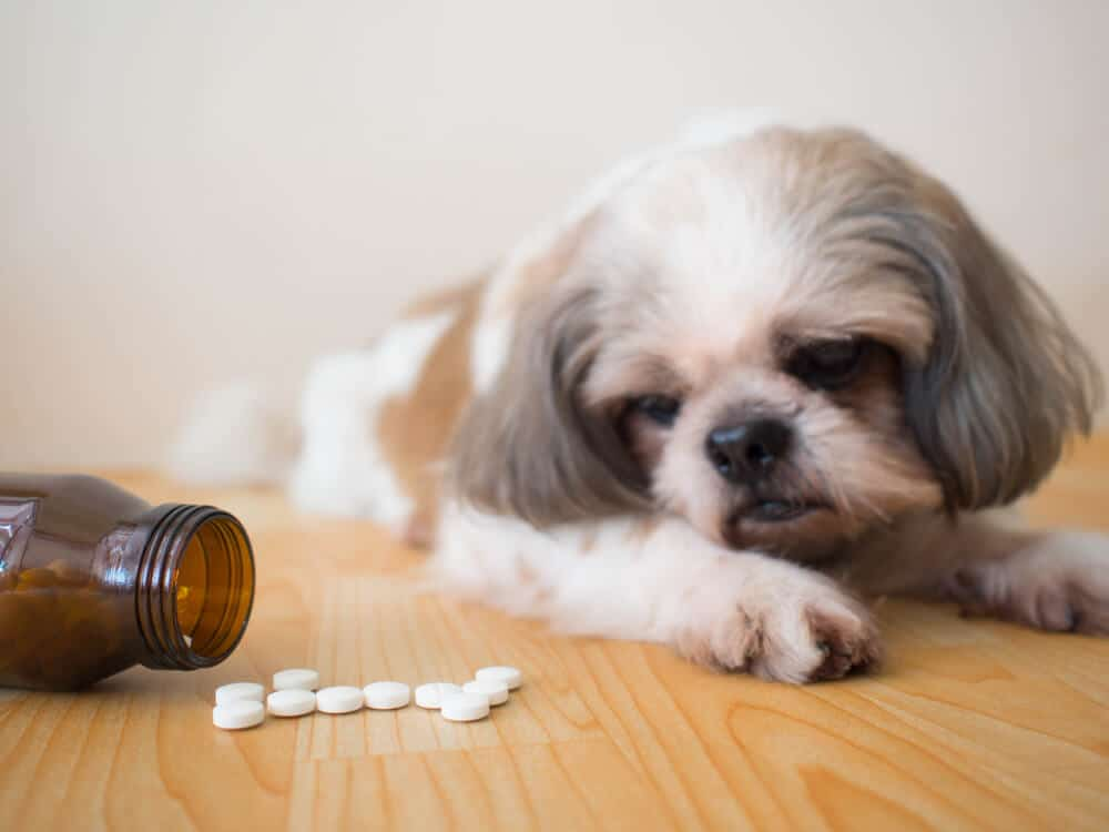 Benadryl For Dogs Is It Safe Dosage And Side Effects Drug Genius