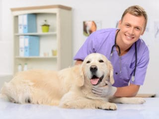 A veterinarian holding a golden dog on a table at the vet's office. Pepto-Bismol for dogs concept.