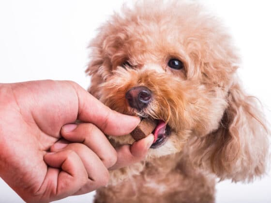 A light brown dog eating a chewable medication from its owner's hand.