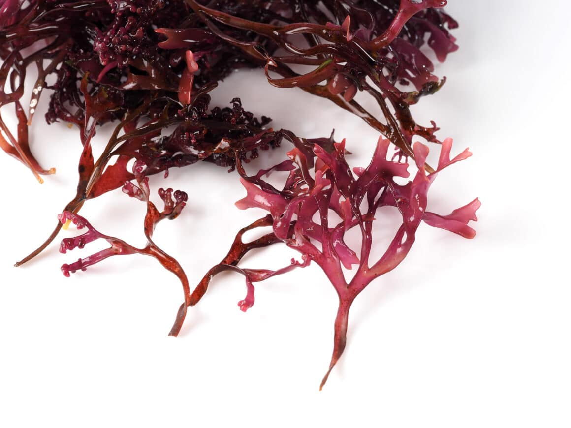 what does sea moss taste like