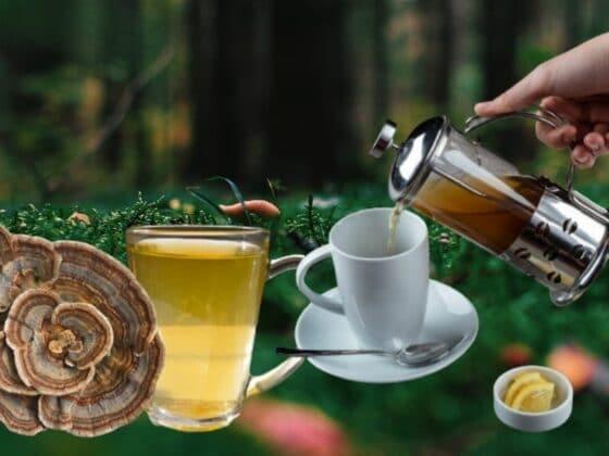 Turkey Tail Mushroom Tea